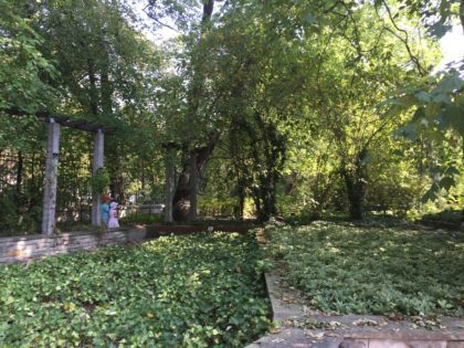 University of Warsaw Botanic Garden with children, attractions for kids, secret garden