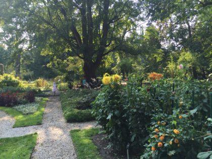 University of Warsaw Botanic Garden with children, attractions for kids, flowers