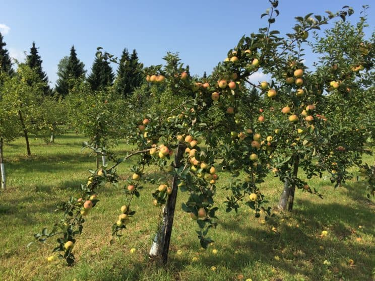 Botanical Garden in Powsin with kids, apple trees in Powsin