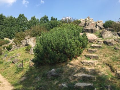 Botanical Garden of the Polish Academy of Sciences in Powsin with children, attractions for kids, rocks