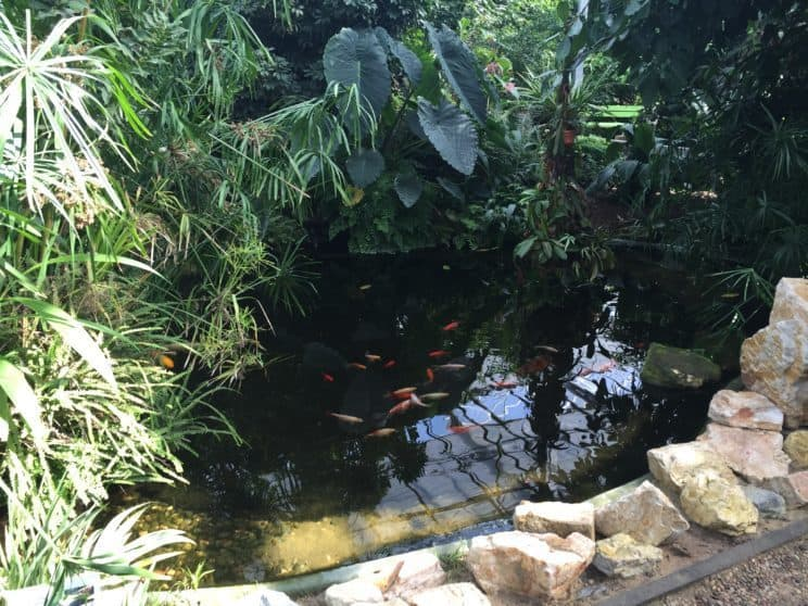 Botanical Garden in Powsin with kids, powsin, fish, pond, green house