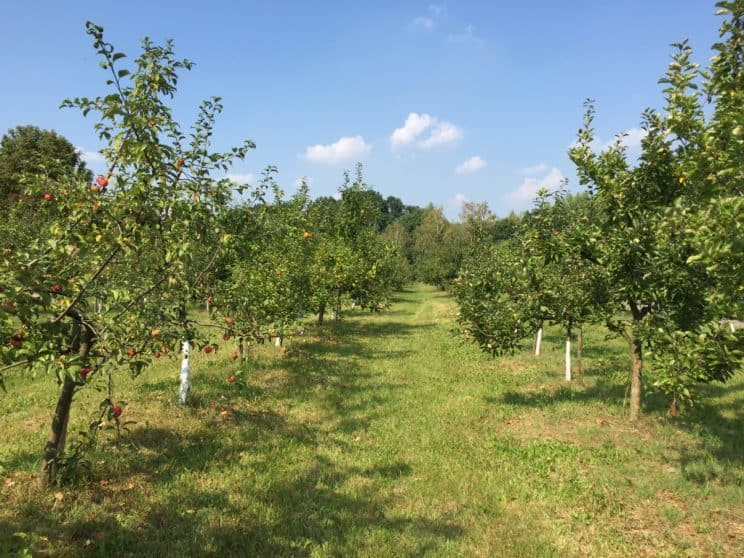 Botanical Garden in Powsin with kids, apples, apple trees in Powsin