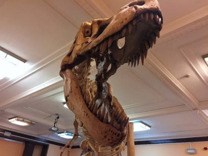 Natural History Museum (Museum of Evolution) in Warsaw - attractions for kids - jaws of a dinosaur