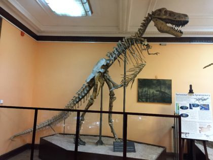 Natural History Museum (Museum of Evolution) in Warsaw - attractions for kids - dinosaur skeleton
