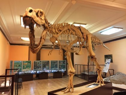 Natural History Museum (Museum of Evolution) in Warsaw - attractions for kids - dinosaur