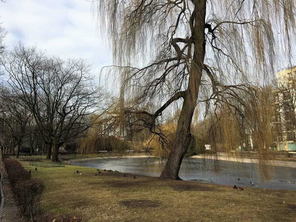 Saxon Garden in Warsaw, Ogrod Saski, pond