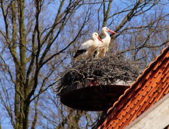 birds-1288003_1920