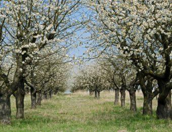 blossom-2193372_1920