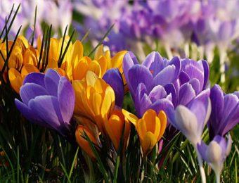 flower-2157890_1920