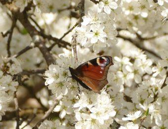 flower-3067746_1920