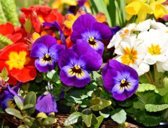 flower-3312542_1920