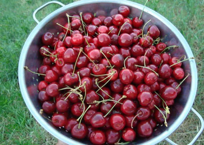 cherries-3728706_1920