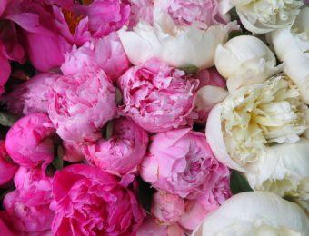 flower-3214042_1920