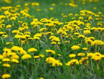 flower-3353044_1920