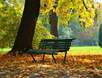 autumn-1877749_1920
