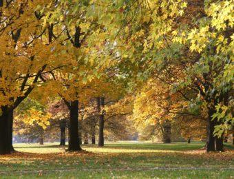 autumn-194947_1920