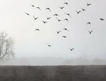 fog-66267_1920