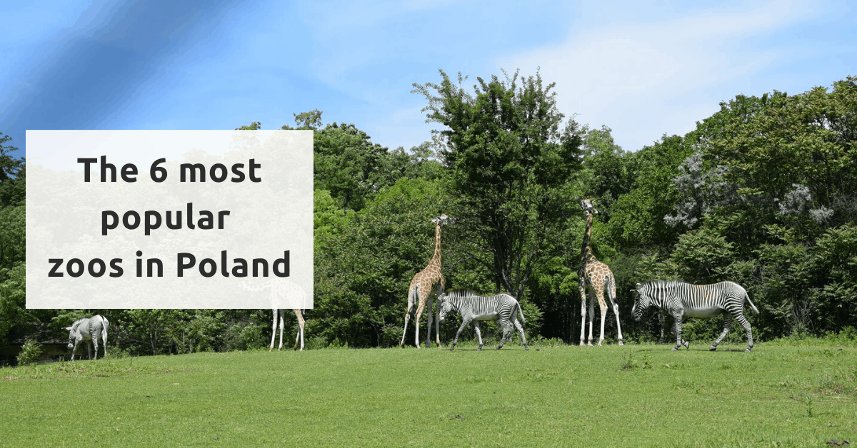 The 6 best zoos to visit in Poland
