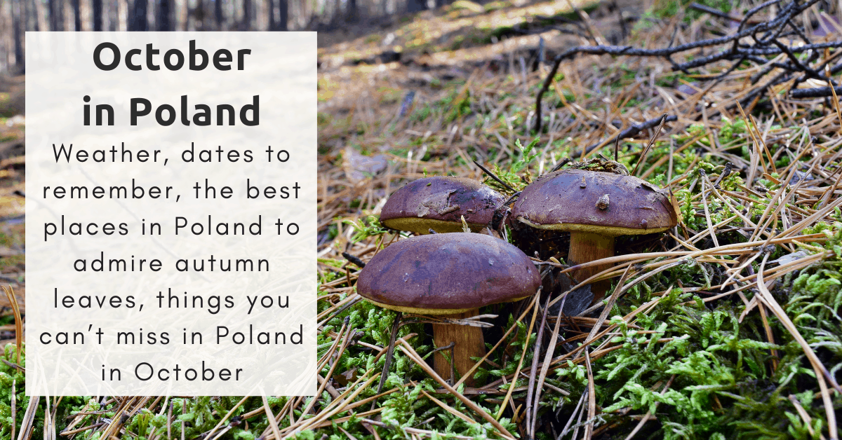 Things to do in Poland in October